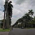 2009.7.4 台灣大學椰林大道