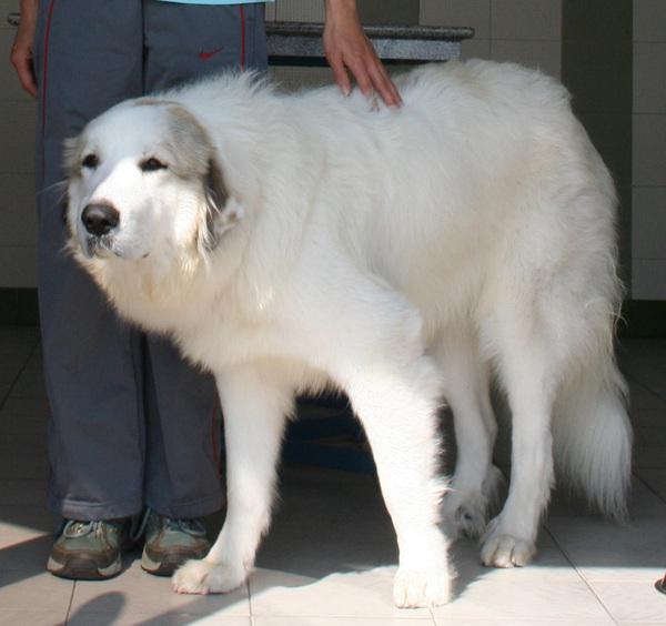 2008.1.6 Mui Wo Inn 的狗狗
