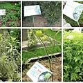 香氛植物 (部分)