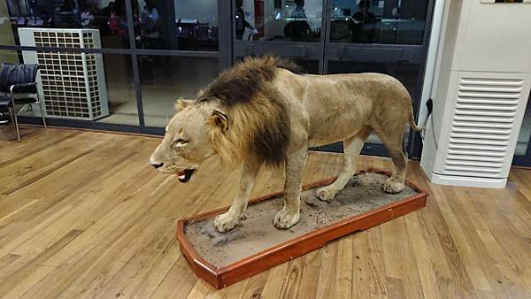 為什麼這獅子是地中海的...