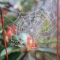 漂亮的蜘蛛網