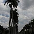 台大椰林大道