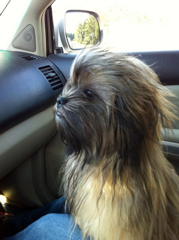 chewbacca-dog.jpg