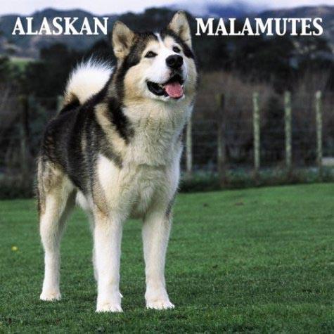 阿拉斯加雪橇犬 2.jpg