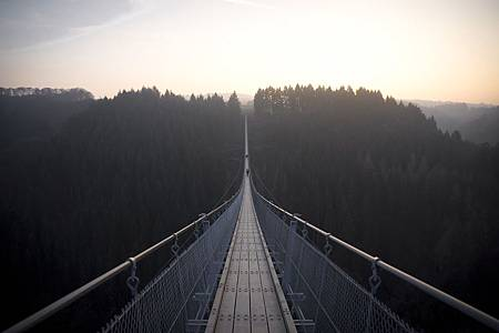cable-suspension-bridge-forest