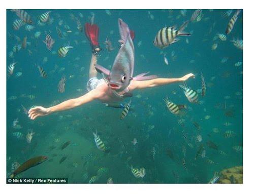 魚頭人身 Nick Kelly意外拍下有著「魚頭人身」的新物種