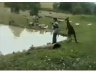 超白目袋鼠 野生動物園 男子被袋鼠冷不防的「踹」進湖裡
