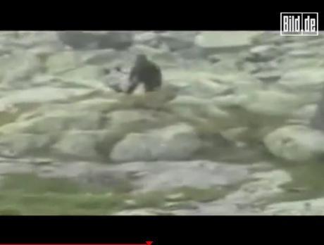 """游客拍到的所謂""""波蘭猿人""""視頻的截圖"""