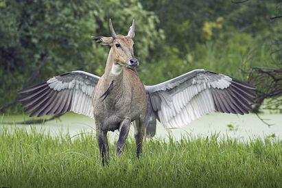 神獸 飛馬 類似希臘神話中的「飛馬」