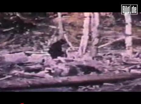 波蘭猿人 和美國的大腳怪很相似