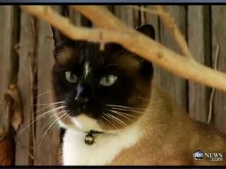 美國加州大賊貓達斯提(Dusty),3年偷走600樣鄰居的物品。