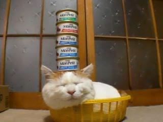 號呆貓 白色巨塔 熟睡貓咪遭惡搞,變成「白色巨塔」。
