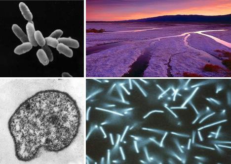 史上最老生物 科學家可能已找到世界上最老的生物,它們已經3萬4千歲了