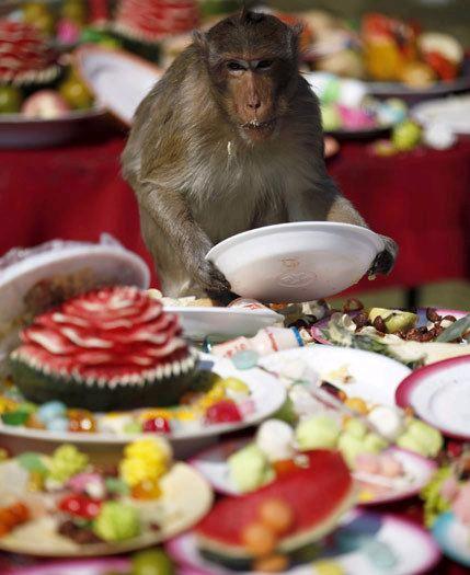 泰國猴宴 無限量供應猴子食物