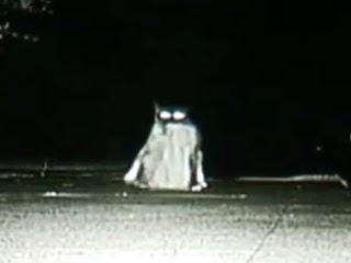 加州大賊貓 (Dusty),3年偷走600樣鄰居的物品。