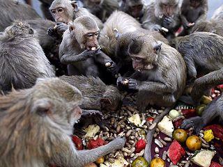 泰國猴宴 超過4千公斤的蔬菜水果