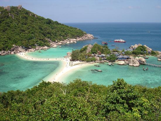 魚頭人身 泰國龜島(Koh Tao)