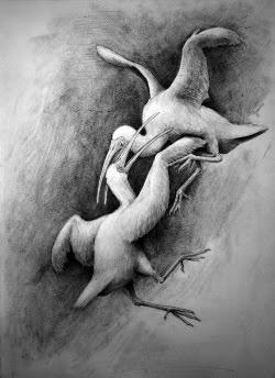 史前忍者鳥 絕種的鳥類,堪稱為史前「忍者鳥」(Xenicibis)
