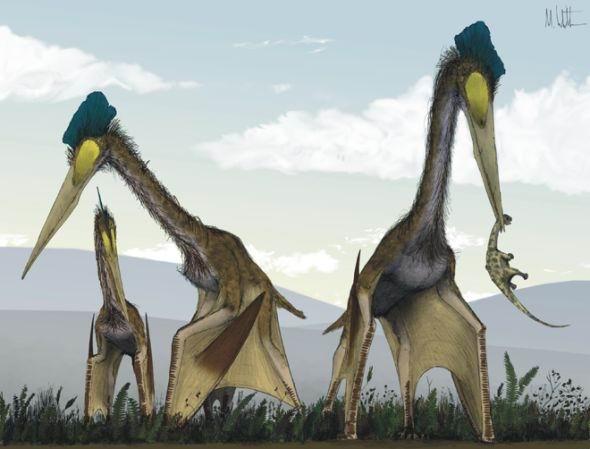 史前風神翼龍 巨型 6500萬年前最大的巨型翼龍一次可不間斷的飛行1萬英里。
