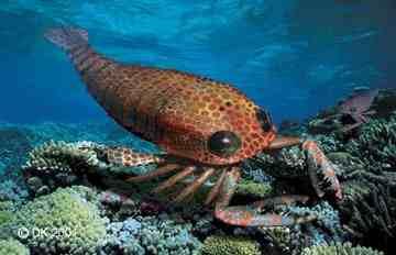 古海底巨蠍 比恐龍還早出現的海底巨蠍有「海底暴龍」之稱