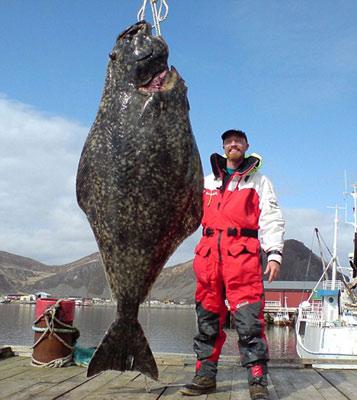 超大比目魚 2公尺