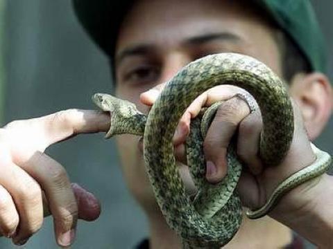 蛇人部落 「蛇人」通常用袋子裝著蛇四處賣藝