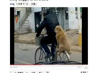 山東淡定狗 ,被網友誇獎「神態淡定」,實在有夠拉風。
