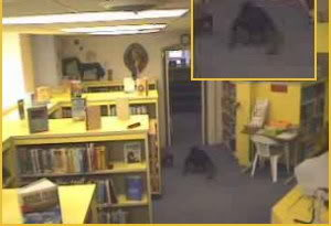 一團不知名的物體在兒童閱讀室裡的地上爬行...
