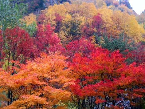 北海道楓蟹-1.jpg