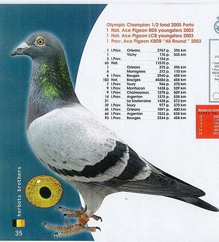 奧林匹克代表鴿鴿王菲利普.jpg