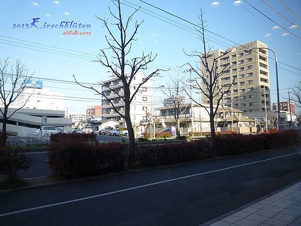 清晨的和歌山市街道