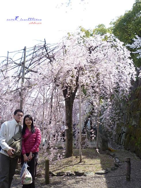 和歌山城公園內