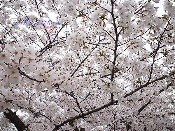 櫻之宮公園