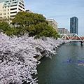源八橋上看櫻之宮公園
