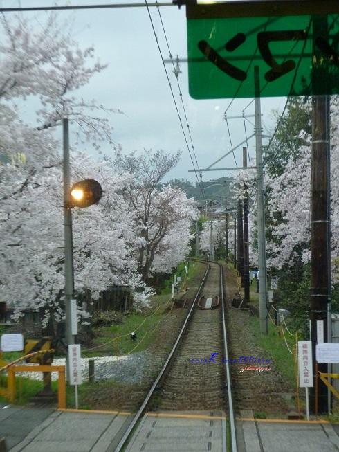 嵐電櫻花隧道