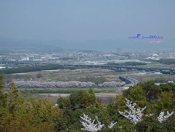 男山遠眺淀川河川公園背割堤