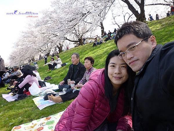 淀川河川公園背割堤賞櫻