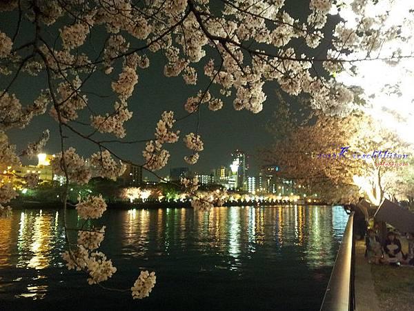 櫻之宮公園夜櫻