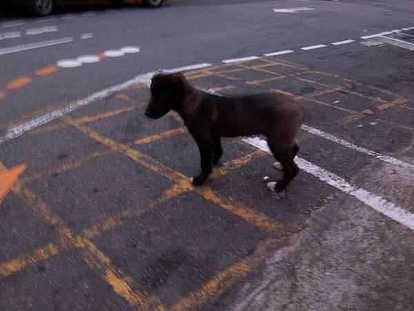 一隻很勇敢的小小流浪狗
