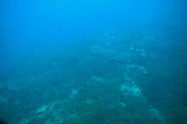 窗外的海底世界