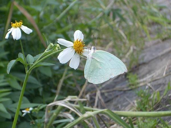 綠色的蝴蝶喔