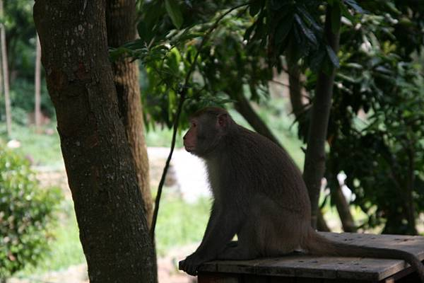 猴子!PINKY給我!