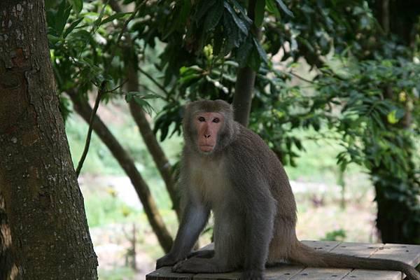 小內很喜歡猴子喔!