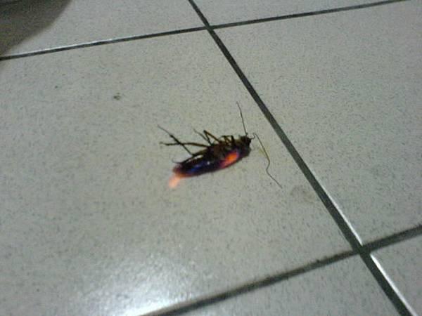 再用電擊拍壓在蟑螂上,按下開關