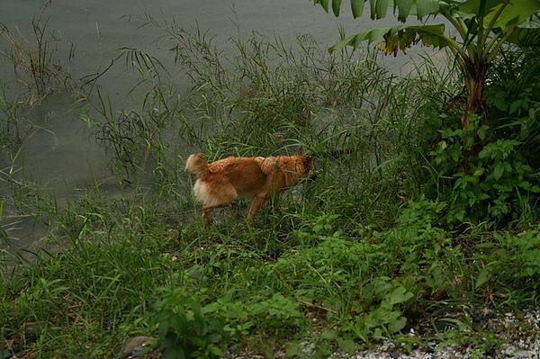 他很喜歡靠近池子亂嗅