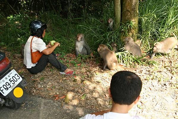遇到大嬸坐在地上削芭樂餵猴子