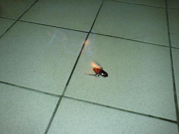 我昨天又燒了一隻蟑螂