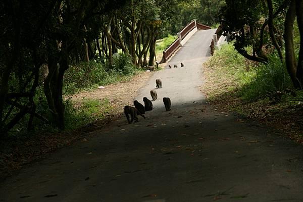 所以我決定坐在地上,等那些猴子過來