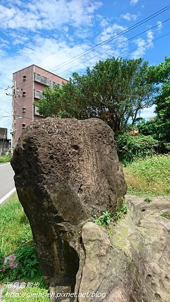 【陪烏龜散步】20170520 八斗子藻樂趣_八斗子社區