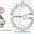 兔圓圓乳牙圖1.jpg